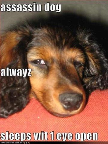 Dog Eye Twitching After Seizure