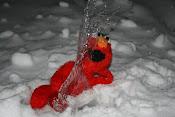Elmo isi iubeste pestisoru:X