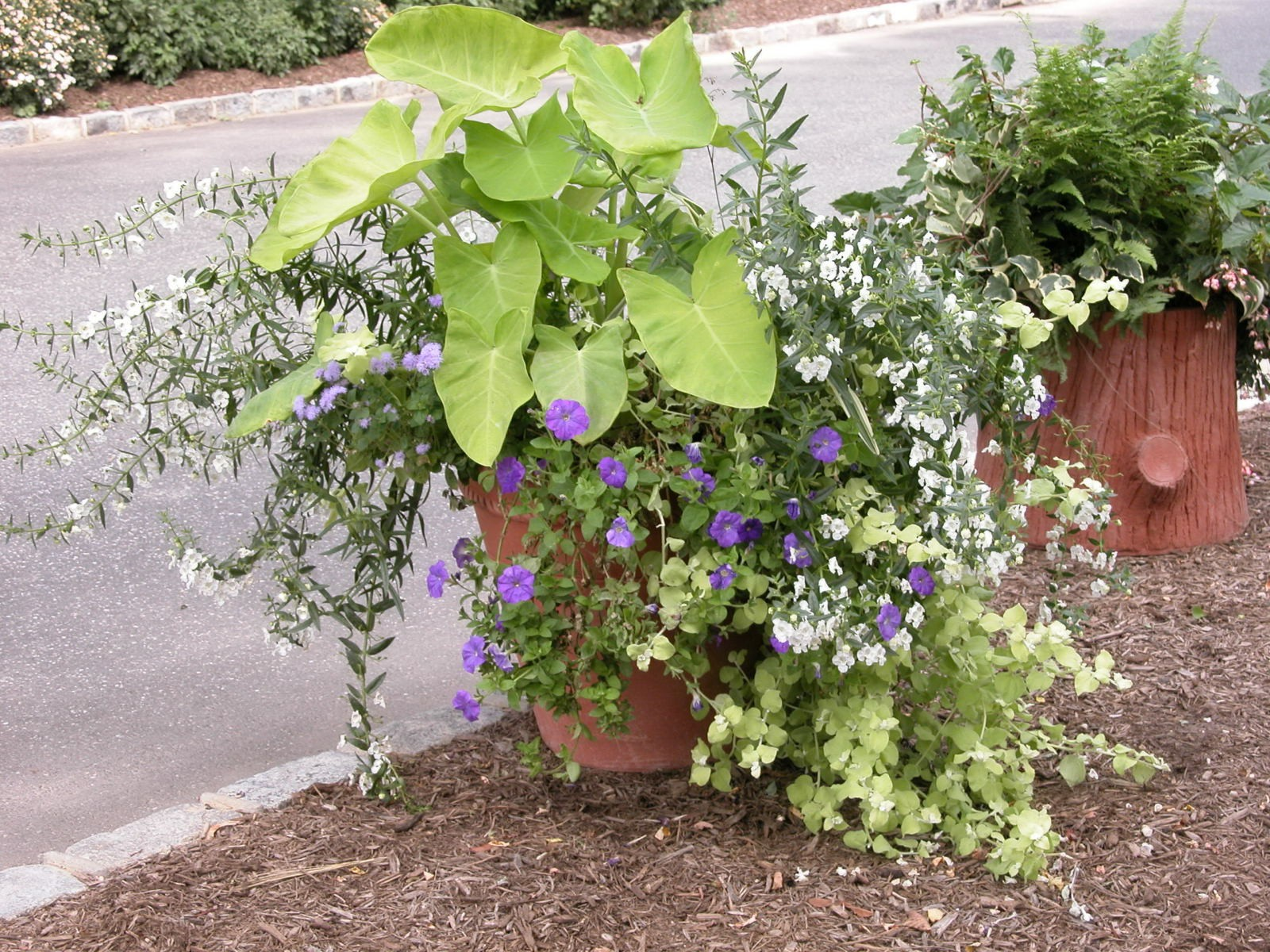 Living livelier 5 tips to creating beautiful container for Container gardening ideas