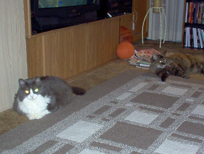 Samantha The Sam and Sabrina The Moms lounging Geriatric cats 20 yrs old and almost 18!