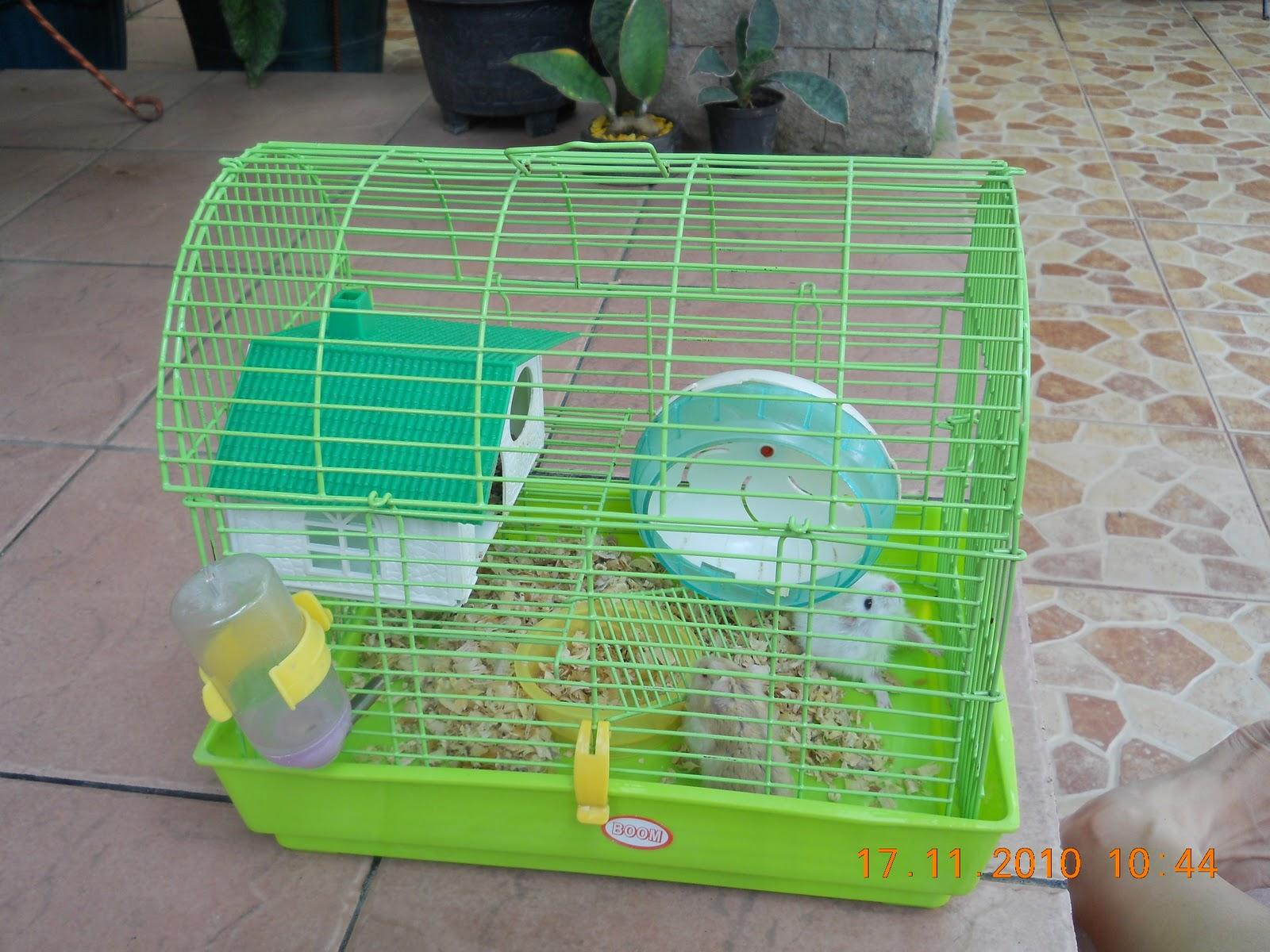Graha Kelinci Toko Perlengkapan Hamster Tempat Makan 500ml Kandang Besar