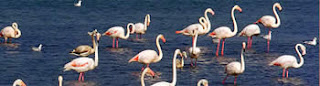 See Pink Flamingos from your barge - Barge charters with ParadiseConnections.com
