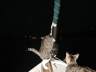 Cats love the night
