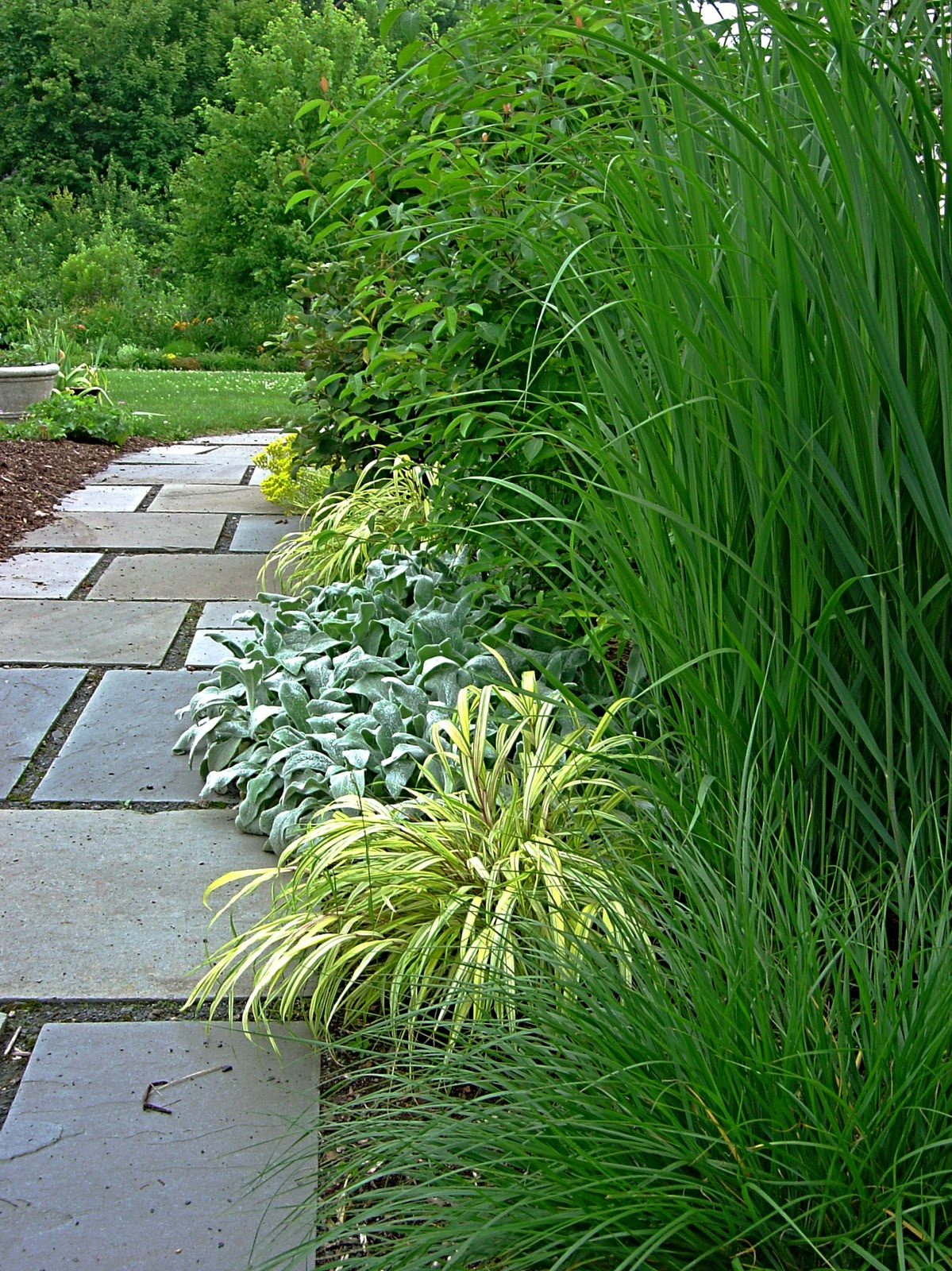 Plant inventory hakonechloa japanese forest grass for Japanese grass