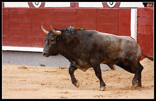 Casta y Bravura: noviembre 2009