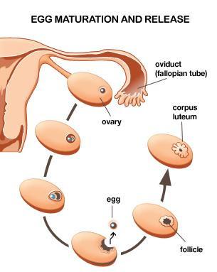 period effect skin