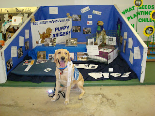 Picture of Brax in a sit-stay in front of the guide dog booth. In the booth there is a dog crate (with breed information), dog pillow, SEGDI sign & many pieces of paper with guide dog facts/such all through out it! The main color is blue.