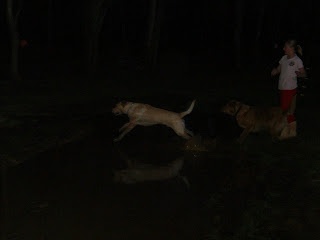 Picture of Toby and Red jumping over the mud puddle - both are trying to catch the dog toy just thrown across