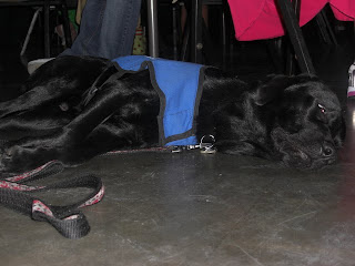 Picture of Sparkie sleeping under our table