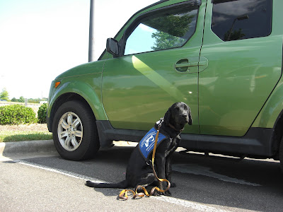 Picture of Rudy in a sit-stay in coat beside the green Element - at the car dealership