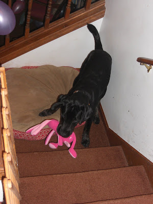 Picture of Rudy playing with his new pink bunny (during the party)