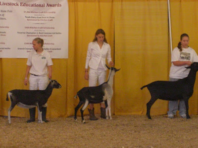 Picture of my raiser showing dairy goats (she's in the middle with one of her younger goats - Rosemary)