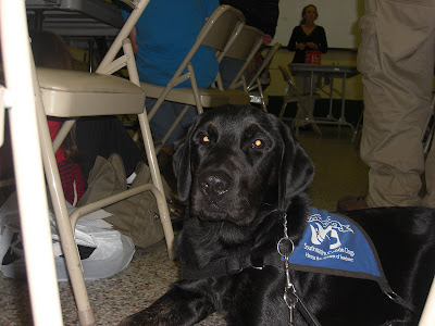 Picture of Rudy in coat in a down-stay at a 4-H meeting