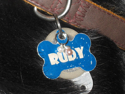 Up close picture of the charm attached to Rudy's tags - with the collar on Rudy's neck