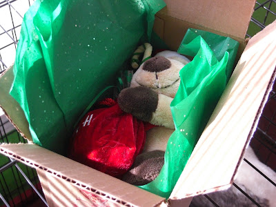 Picture of the stuffed Santa dog we received in the mail - it's still in the box with pretty green tissue paper around it!