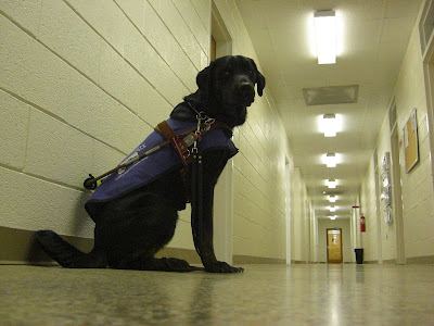 Picture of Rudy in a sit-stay wearing the guide dog harness over his puppy coat in our 4-H building