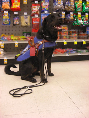 Picture of Rudy in a sit-stay in coat/harness with the candy section behind him