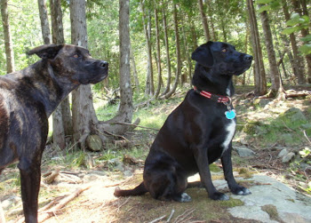 My Dogs Priscilla & Frankie