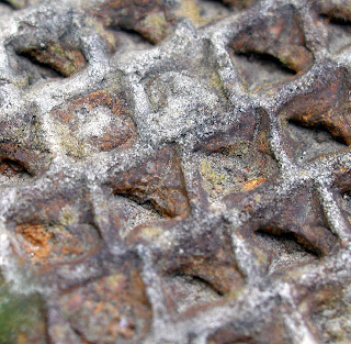 Macro photo of a section of fossil fern tree