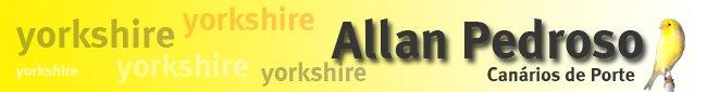 Canário Yorkshire (AP york)