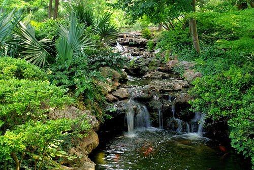 Koi Pond With Waterfall Koi Fish Care Info