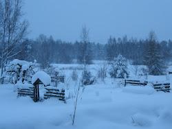 Min örtagård i vintersömn..
