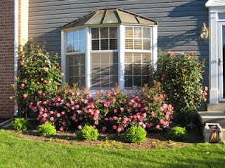 Garden Designs With Knockout Roses