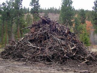 debris taken from Sweathouse Creek