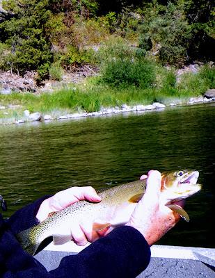 Clark Fork River Trout