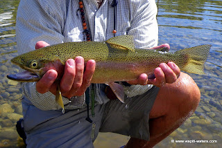 Fly fishing the Bitterroot with clients from Arizona