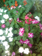 Mi diminuto jardín a lado de la escalera