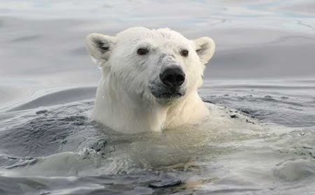 OSO POLAR
