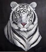macan