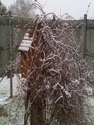 snow on bluebird house in Maysville Alabama