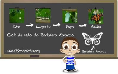 Ciclo de vida da Borboleta Monarca