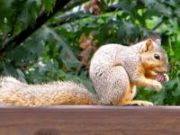 MEET NEMESIS SQUIRREL