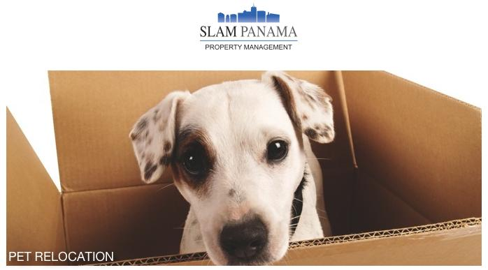SLAM Panama offers superior pet relocation service, whether your pet will be