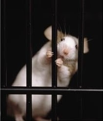 Mouse behind bars. © Rudi von Briel