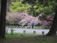 Cherry Blossoms Palace Gardens Kyoto, Japan Spring 2005