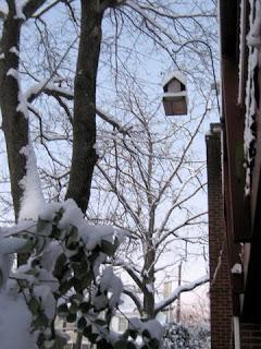D.C.'s first snow of the season, Dec 2007