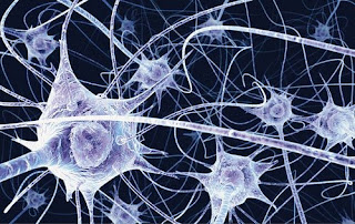 Neurons in the brain El funcionamiento de la memoria y sus trucos