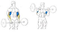 curl biceps