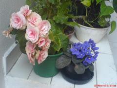 As florzinhas da casa da minha Mãe!!!