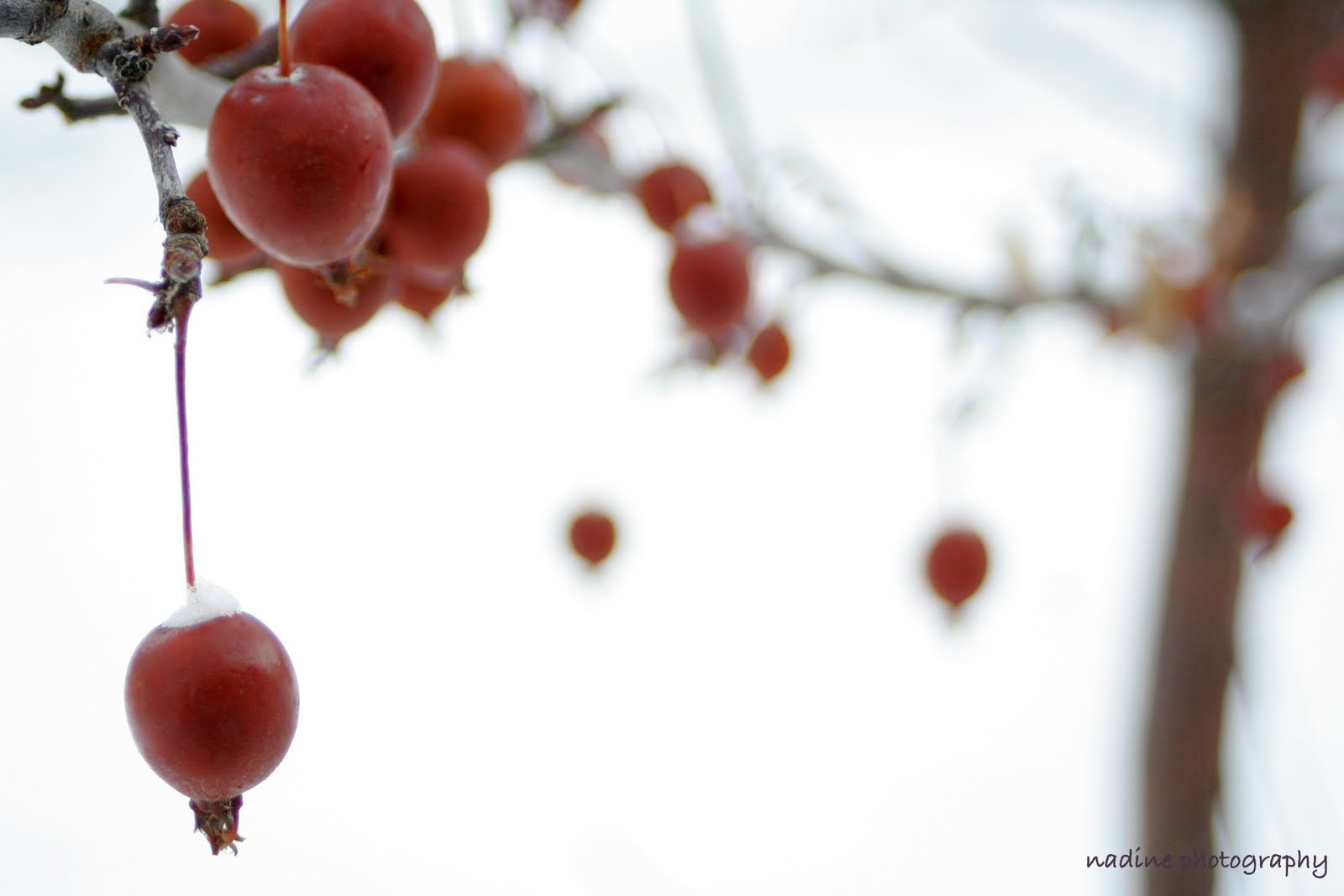 [berry+1]