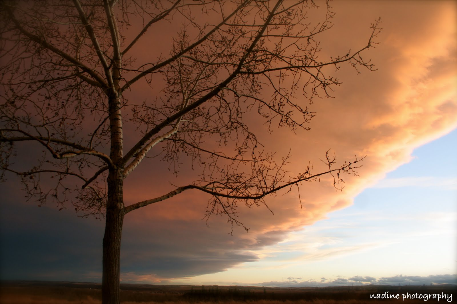 [sunset+tree]