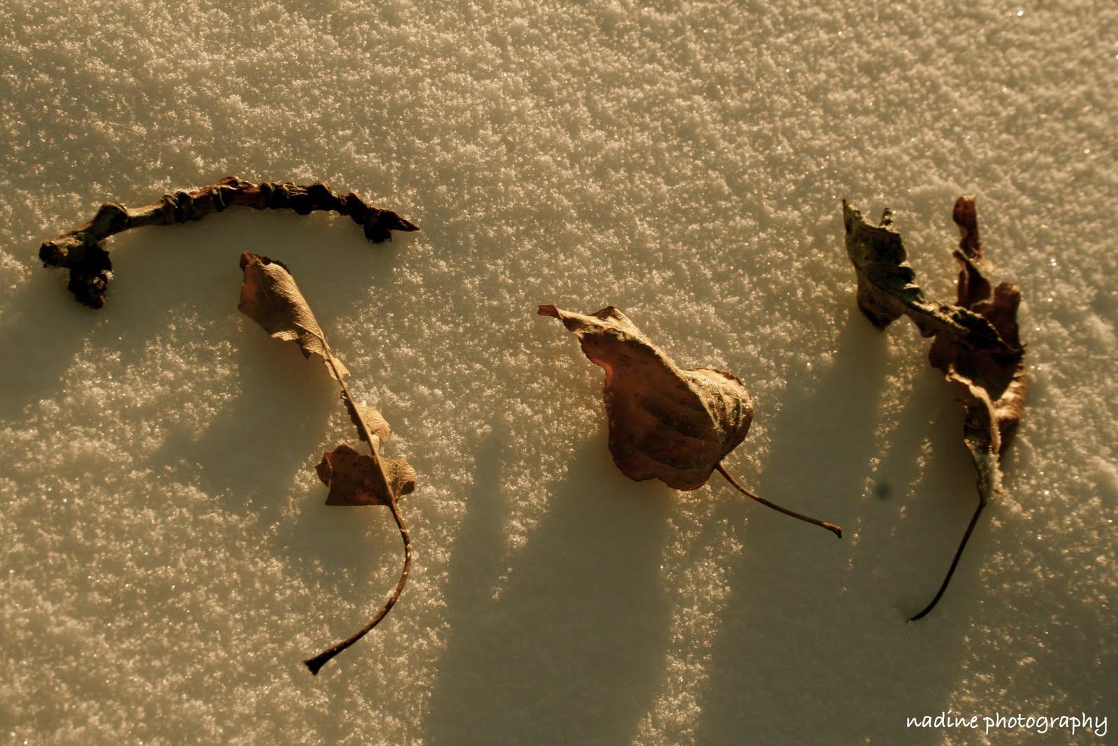 [joy+leaves]