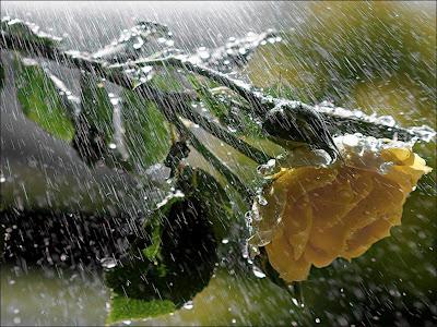 Agua en Imágenes