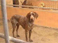 Pinto, adoptado en 2009!
