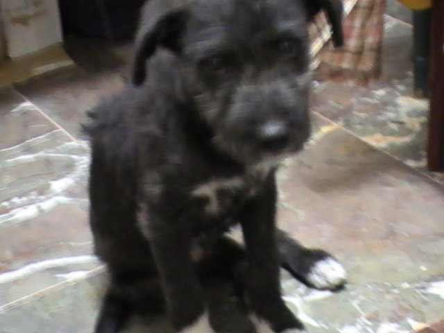 CANDY, adoptada!!!