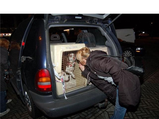 Nuestra querida KIRA se fué a Holanda despues de tantos años con nosotras!!